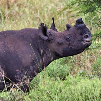 Feeding Rhinos and Offsetting Carbon