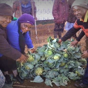 Long Term Food Gardens with Tiger Brands