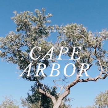 Cape Arbor 2019