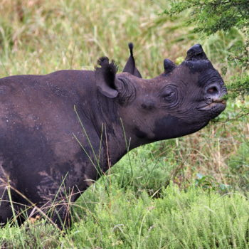 Feeding Rhinos and Offsetting Carbon
