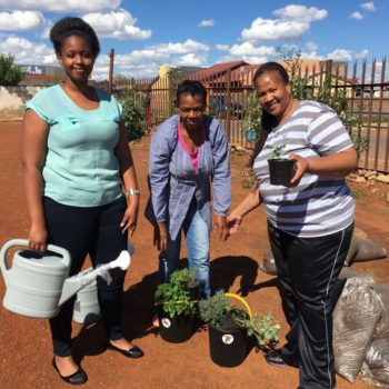 Gardens for Homes with Tiger Brands