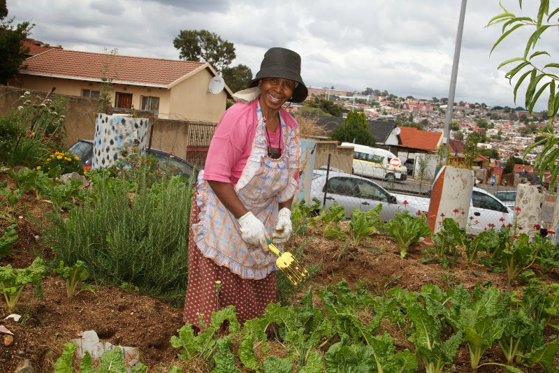 Community Market Gardens Food Trees For Africa