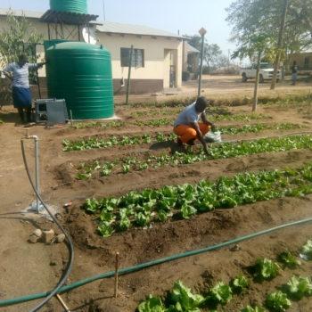 Community Champions Help Rural Orphans