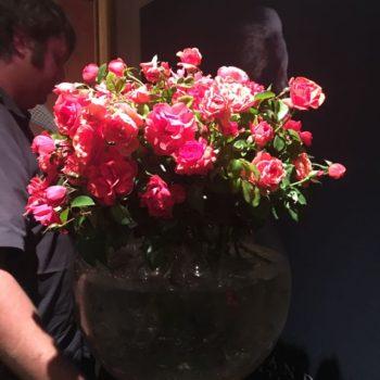 The Mandela Rose