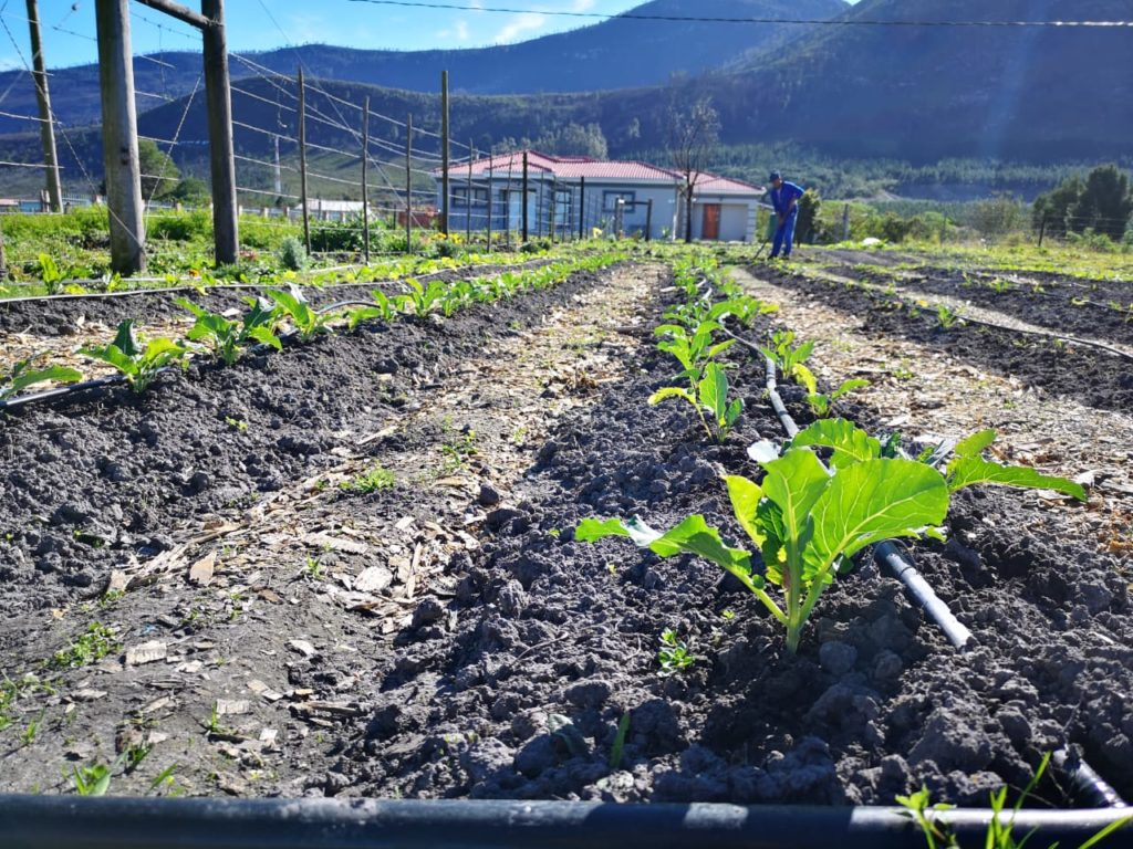 FTFA boosts food production to uplift communities