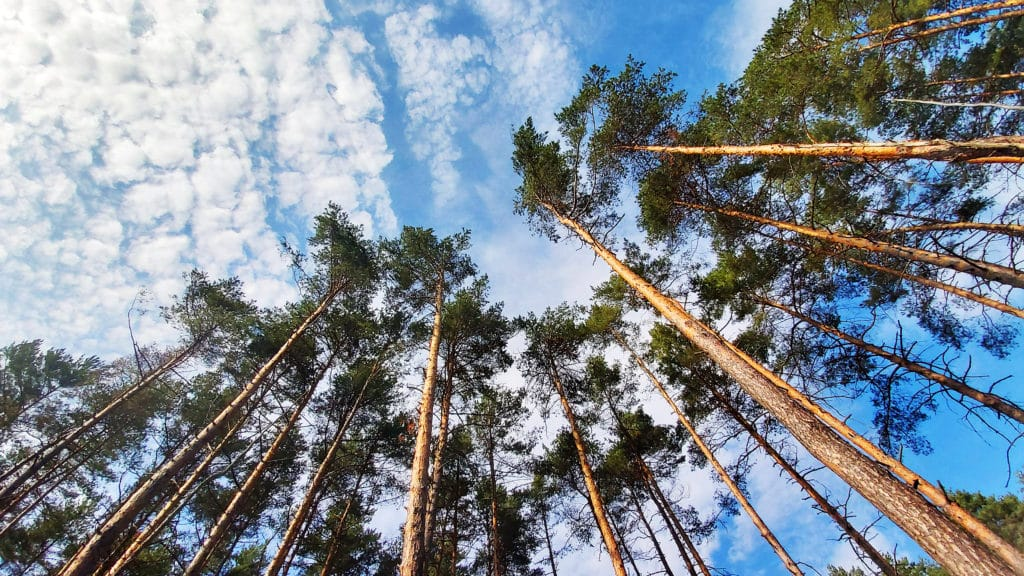 Plant trees offset carbon